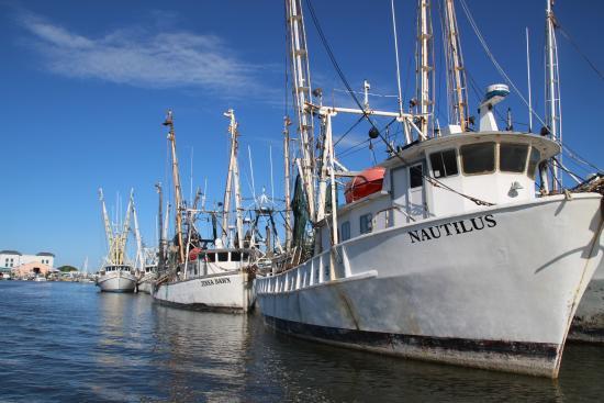 Trico Shrimp Co : Shrimping boats
