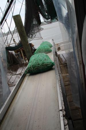 Trico Shrimp Co : Unloading the shrimp