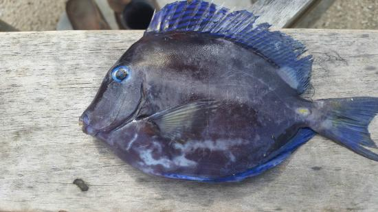 Doctor fish i caught while snorkeling picture of grand for The fish doctor