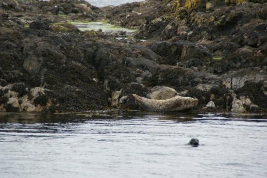 Argyll Charters - Mara Mhor Cruises: Vistas