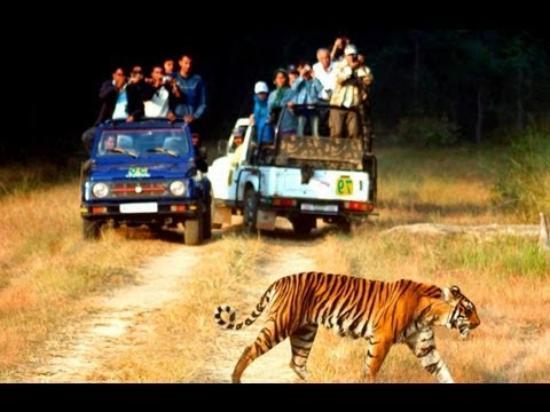 Valmiki National Park, الهند: jungle safari