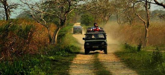 Valmiki National Park, الهند: safari