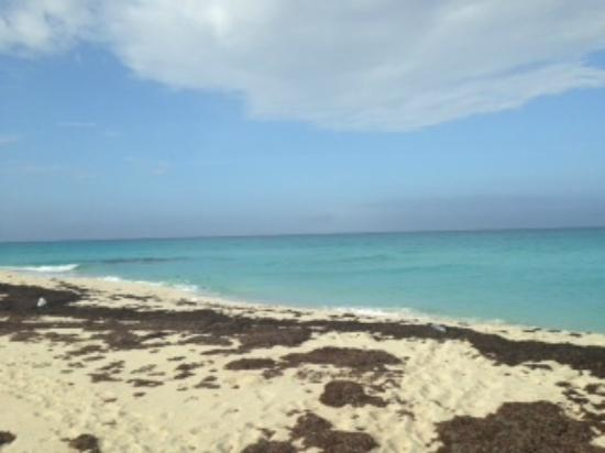 Bimini: View from local eatery (outside of resort)