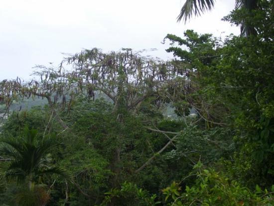 Shaw Park Gardens & Waterfalls : Trees