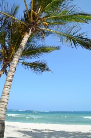 Amani Tiwi Beach Resort: 1