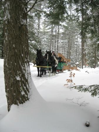 Silver Ranch Stables: Perfect Day for a Sleigh Ride!