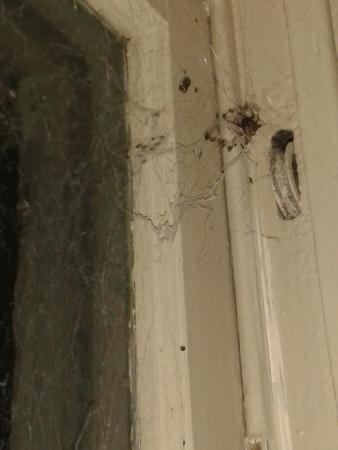 Avoca Lodge: The assumed funnel-web spider coming out of the window frame
