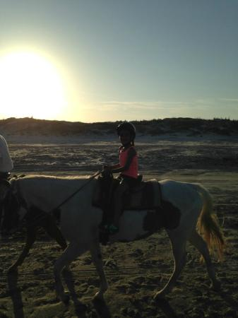 Horses On The Beach: Corpus Christi : Horses on the beach
