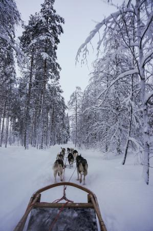 Santa Claus Village: On the dog sled