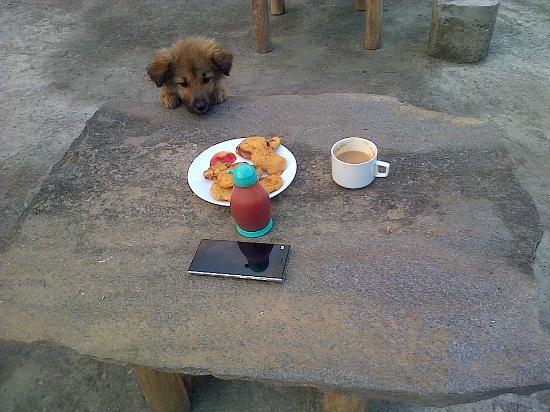 Himalayan Abode Home Stay: Sheru :)