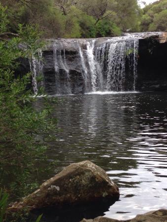 Robertson, Australië: Great swimming hole and waterfall at Nellies Glen near Carrington Falls