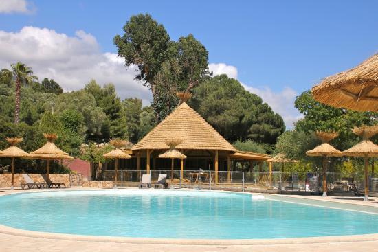 Camping Vigna Maggiore : Paillote et Piscine