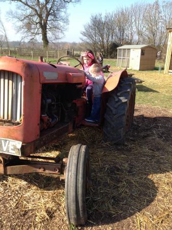 Hollow Trees Farm Shop: Exploring the tractor