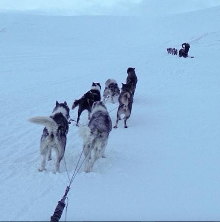Spitsbergen, Norvège : To-personers slæde med seks hunde.