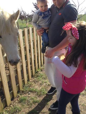 Hollow Trees Farm Shop: Feeding the horses.