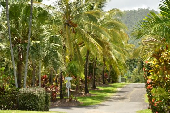 BIG4 Port Douglas Glengarry Holiday Park: shady slabed sites
