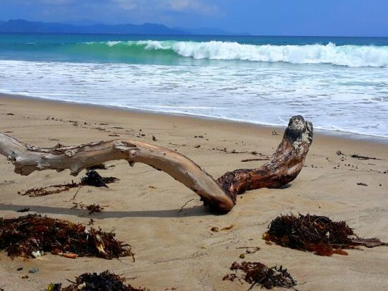 Kuaotunu Bay Lodge : on the beach