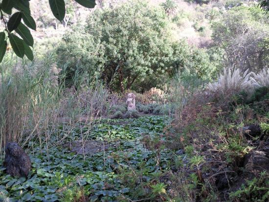 Chasmanthe picture of jardin canario las palmas de for Jardin canario
