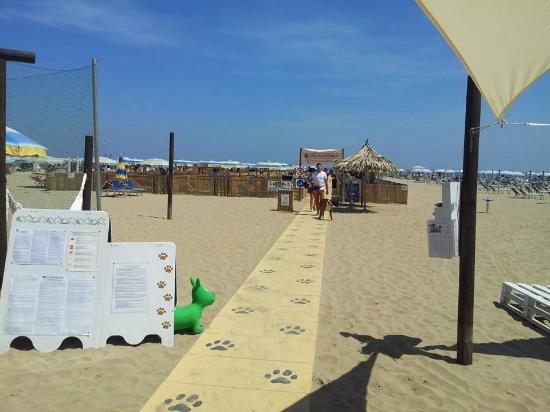 Rimini Dog No Problem La Dog Beach Del Bagno 81 Di