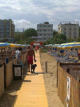 Rimini dog no problem la dog beach del bagno 81 di rimini foto di rimini dog no problem - Bagno 81 rimini ...