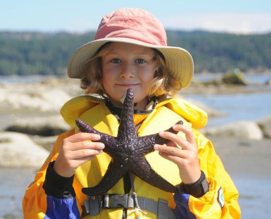 Wildheart Adventures: Sea Star Happy Face