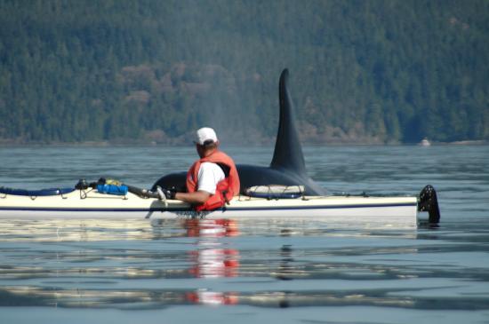 Wildheart Adventures: Bull Orca