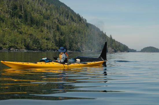 Wildheart Adventures: Johnstone Strait
