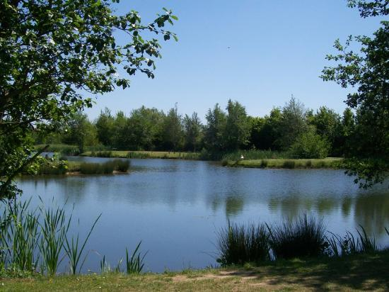 Burton Springs Fishery