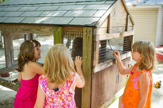 Big Oaks Family Campground : Bunny onsite at Big Oaks Campground in Rehoboth