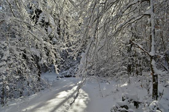 Falls of Hills Creek Scenic Area: Falls of Hills Creek Trai lin the Snow