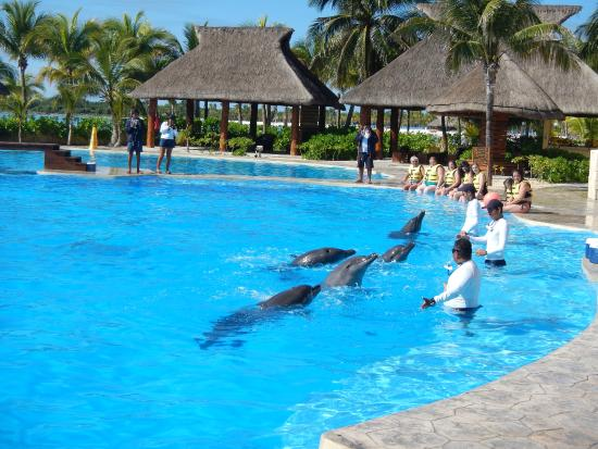 Barcelo Maya Beach Dolphin Adventure