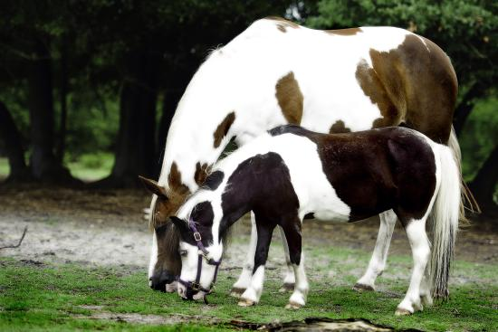 Horse Power for Kids & Animal Sanctuary