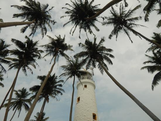 Barberyn Island Lighthouse: Пальмы и маяк