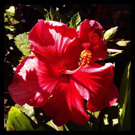 Hostal Marari : Hibisco Jardin