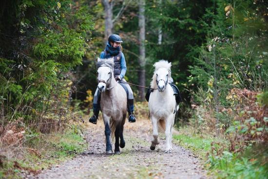 Jau Jau Icelandic Horses