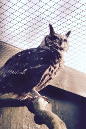 Scottish Owl Centre: beautiful birds