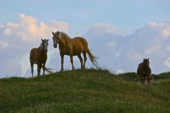 East Cape Lighthouse: Horses at East Cape
