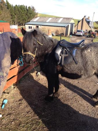 Star Stables: Smokey ready for her hack