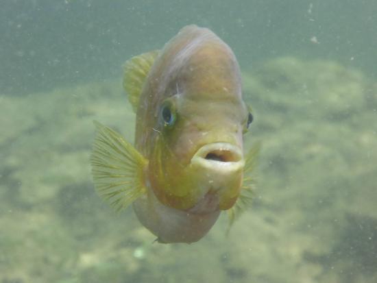 Cenote Encantado: Friendly fish in the cenote!