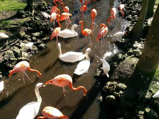 Homosassa Riverside Resort: Homosassa Springs State Park