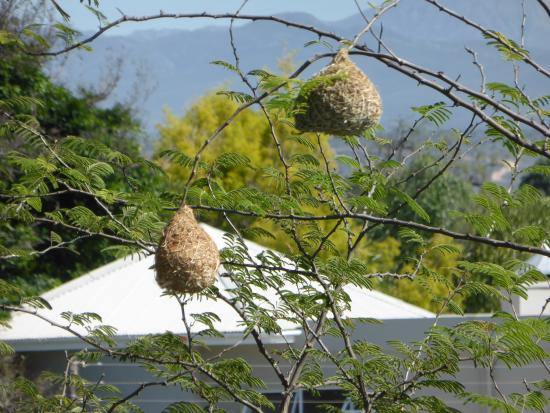 Aloe Manor: Bird Nests in the Garden