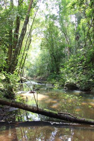 Rio Frio Cave: river that flows through the cave