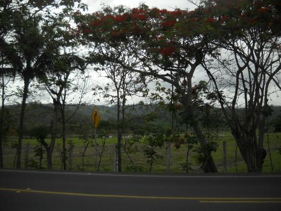 Cabanas Isla del Sol: La puerta del hotel sobre la ruta E-15