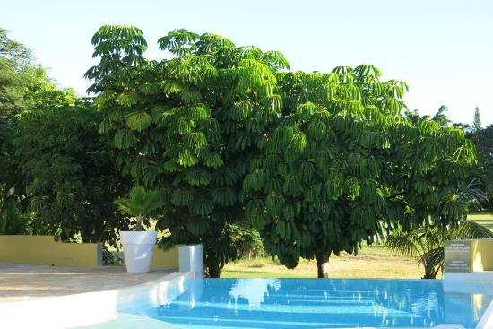 La Metisse : Vue sur la piscine et le parc