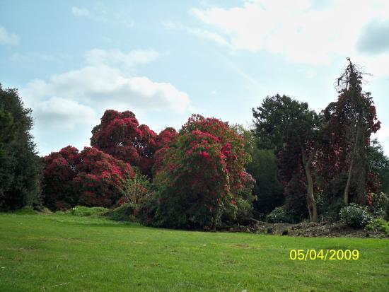 National Botanic Gardens, Kilmacurragh