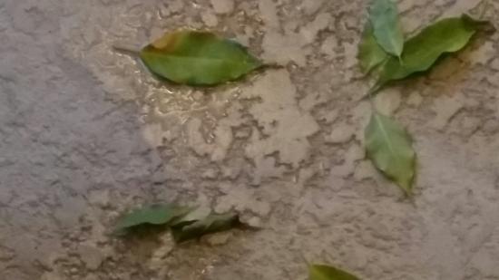 Water's Edge Resort & Spa: Leaves indoors