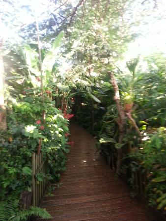 Secret Garden Iguazu B&B : The walk from our room to the small dining area
