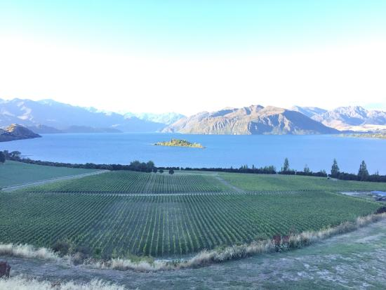 Rippon Vineyard: The view from Rippon