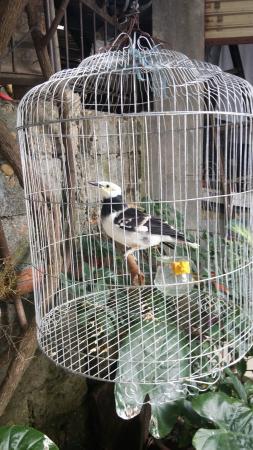 Sunny C Hotel: Крикливый попугай).