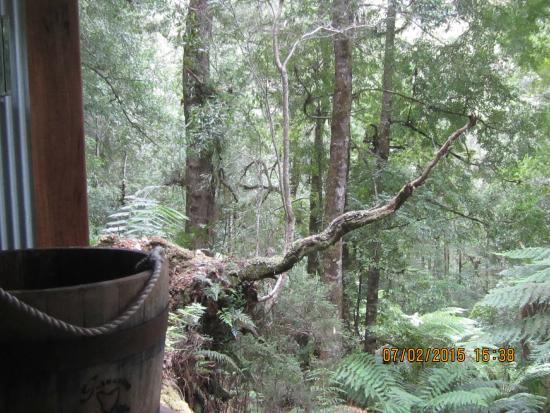 Tarkine Trails - Tarkine Rainforest Retreat: Washroom View